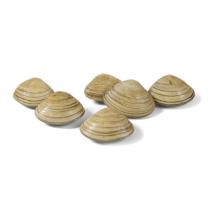 Seaboy Gehele gekookte Venusschelpen 60/80 IQF 1kg Diepvries