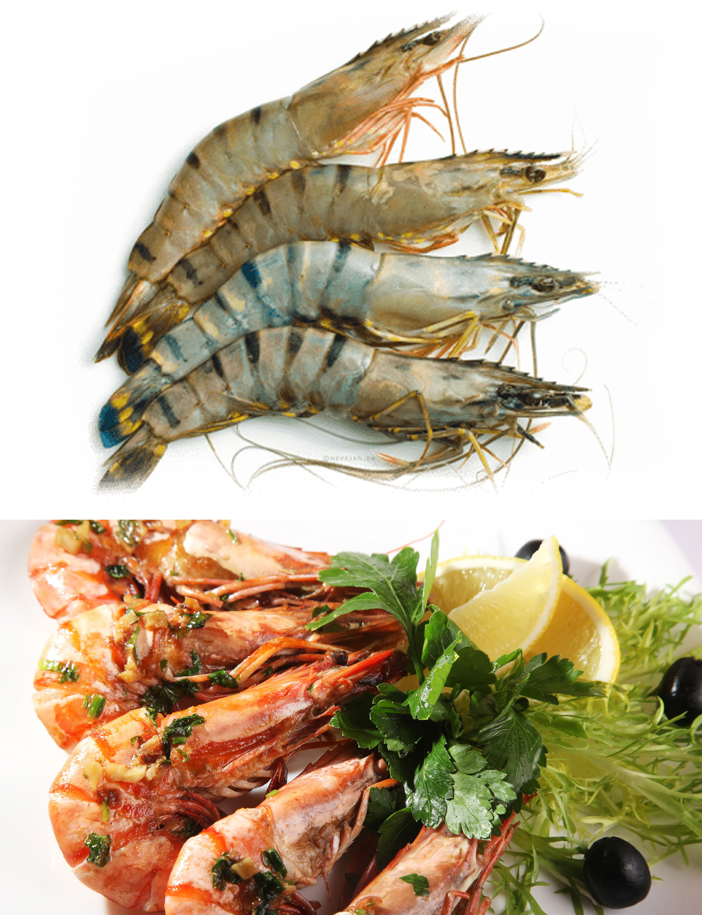 Gamba 8/12 1x1kg BT HOSO giant shrimp with head