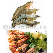 Gamba 6/8 1kg Blacktiger HOSO giant shrimp with head