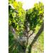 Des-Lyres de Bertinerie rood 75cl Blaye Cotes de Bordeaux